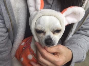 愛犬ミルちゃんです!!